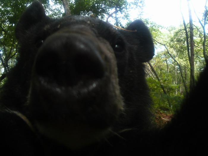 Медведь проверил фотоловушку